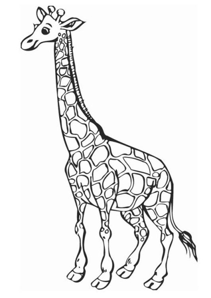 real giraffe coloring pages - photo#13